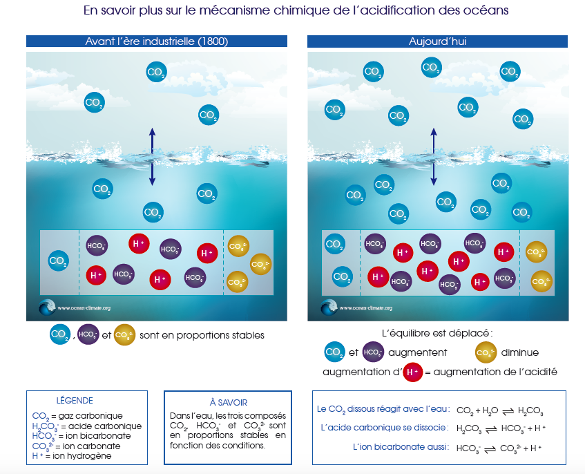 acidification, des, oceans